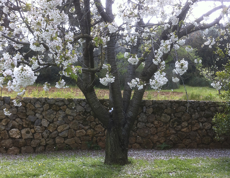 Casa Vacanza Piccalumachelle - Maremma Toscana - Frutteto