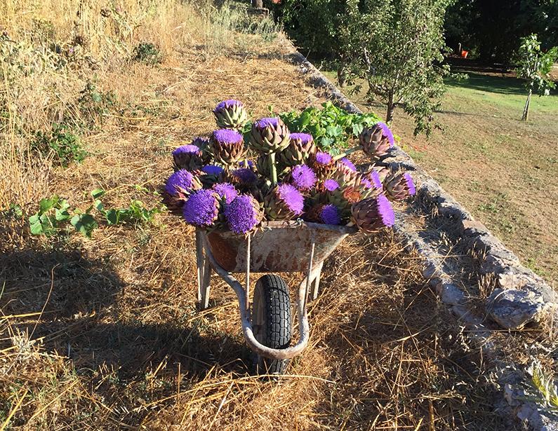 Casa Vacanza Piccalumachelle - Maremma Toscana - L'orto