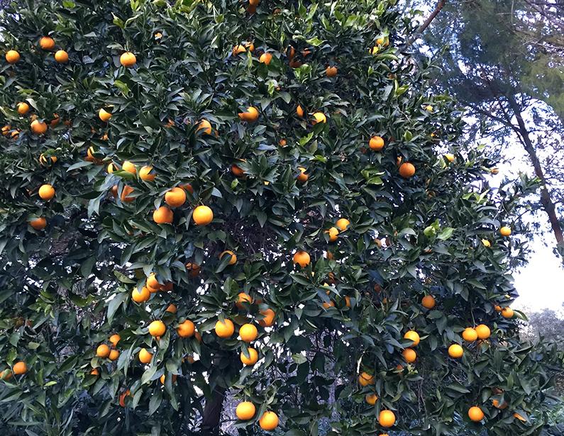 Casa Vacanza Piccalumachelle - Toscana - Frutteto
